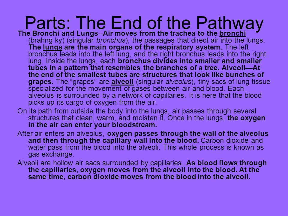 Parts: The End of the Pathway