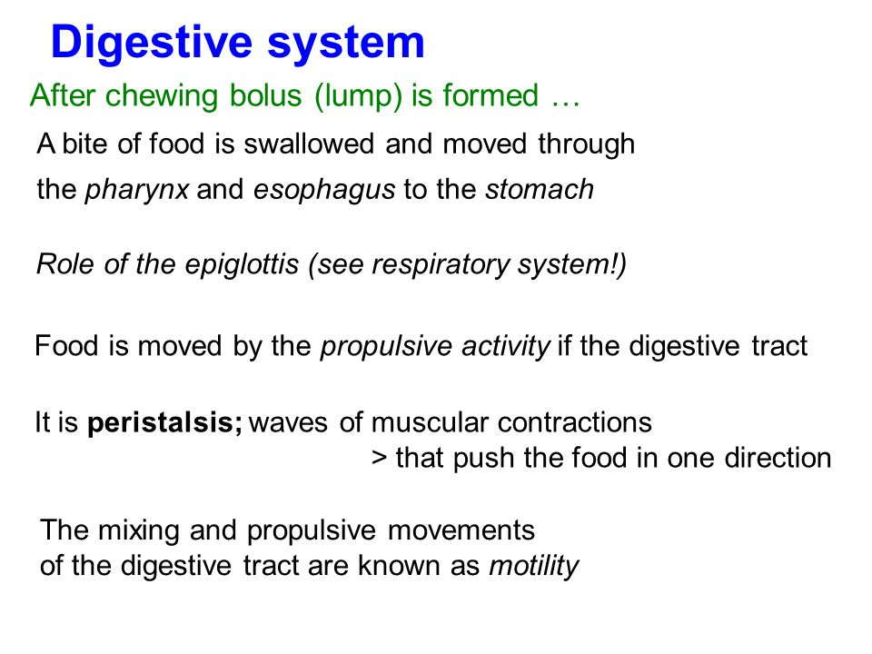 Digestive system After chewing bolus (lump) is formed …