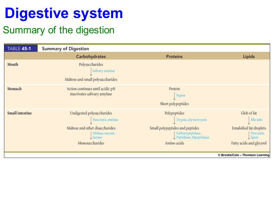 Digestive system Summary of the digestion