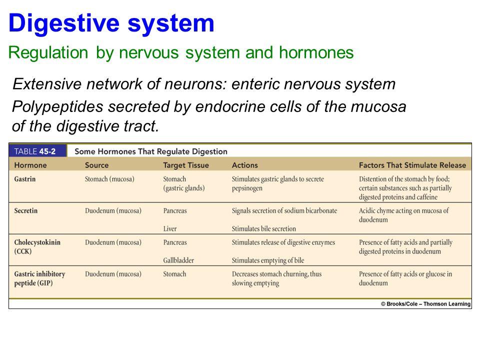 Digestive system Regulation by nervous system and hormones