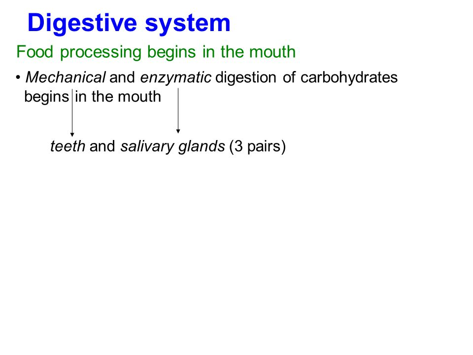 Digestive system Food processing begins in the mouth