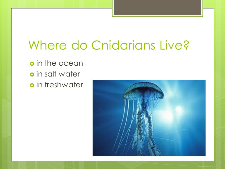 Where do Cnidarians Live