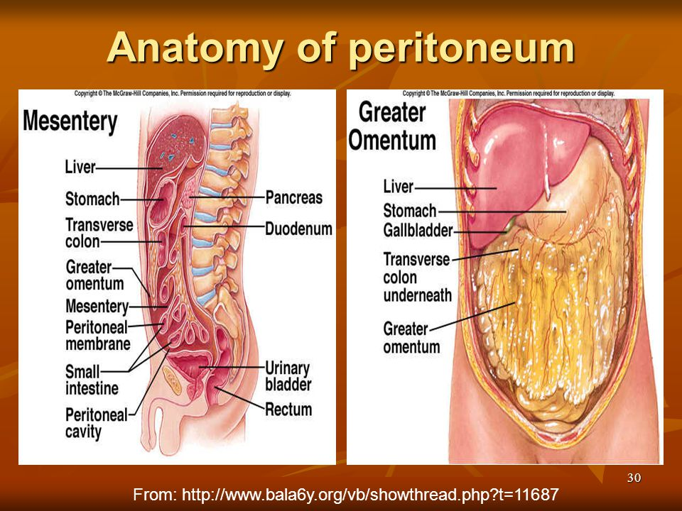 Anatomy of peritoneum From: http://www.bala6y.org/vb/showthread.php t=11687