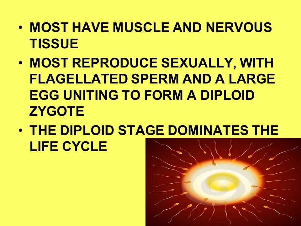 MOST HAVE MUSCLE AND NERVOUS TISSUE