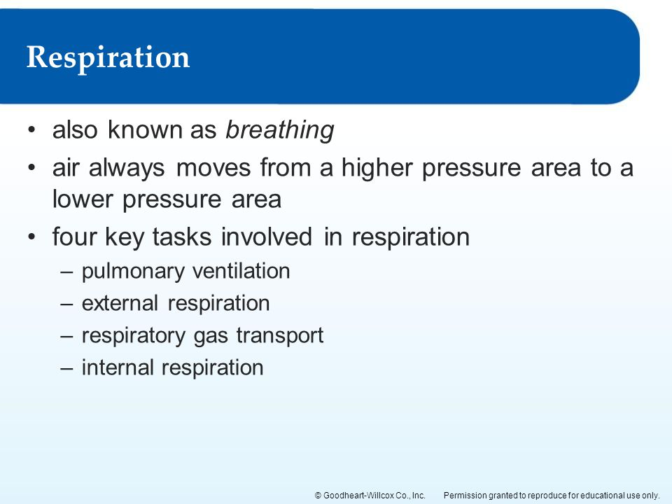 Respiration also known as breathing