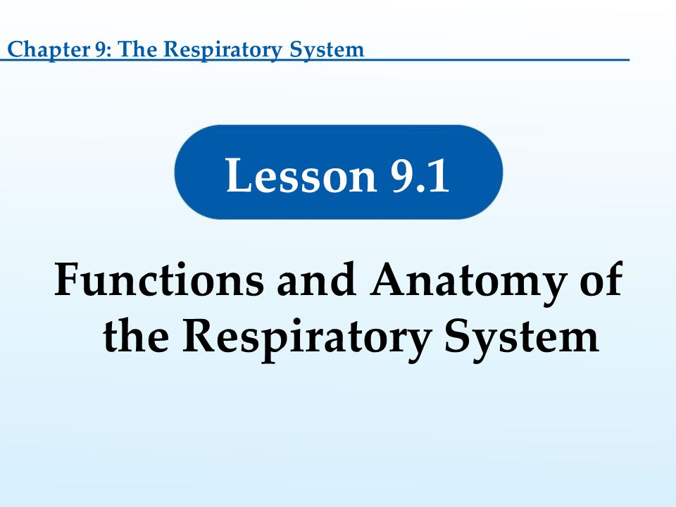 Functions and Anatomy of the Respiratory System