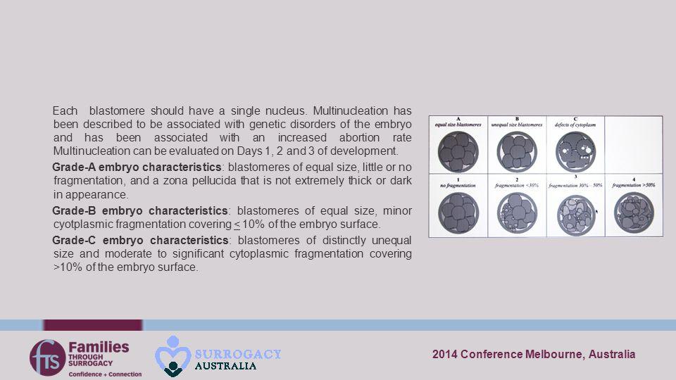 Each blastomere should have a single nucleus