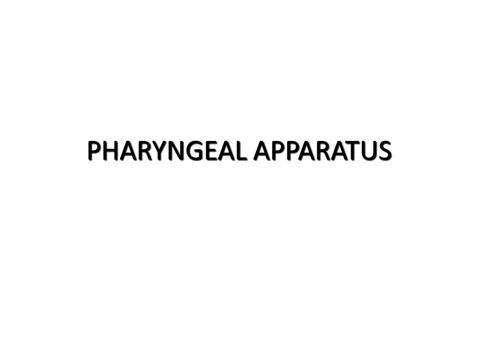 PHARYNGEAL APPARATUS