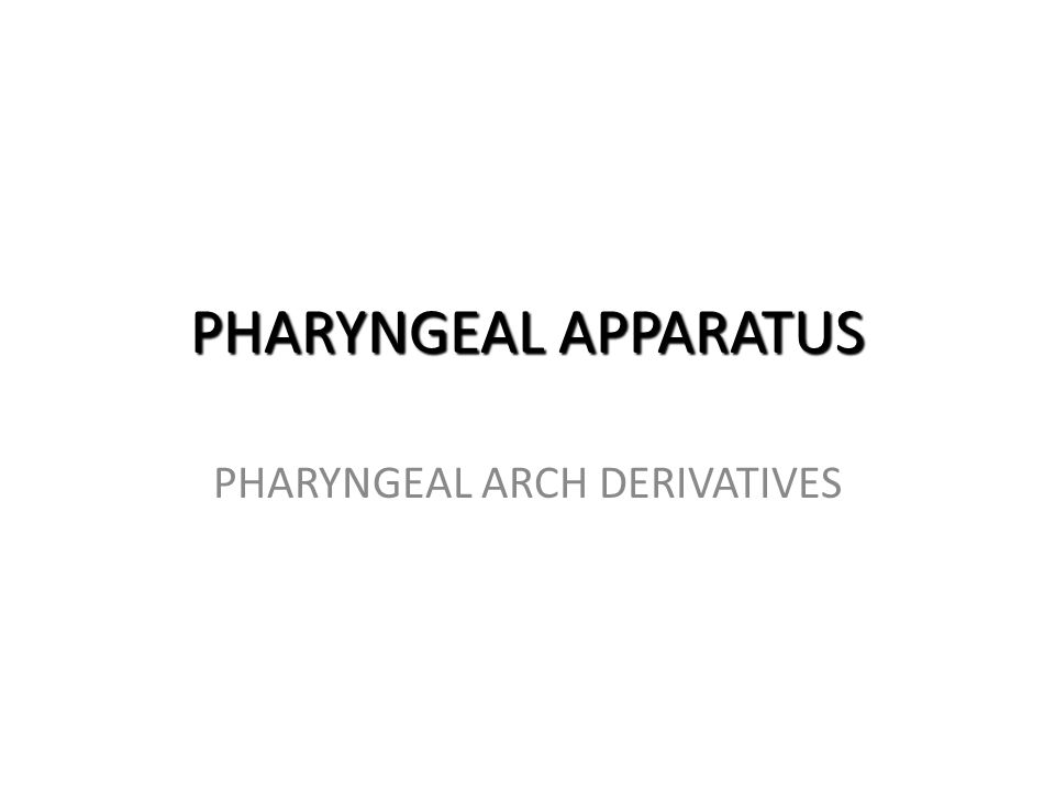 PHARYNGEAL ARCH DERIVATIVES