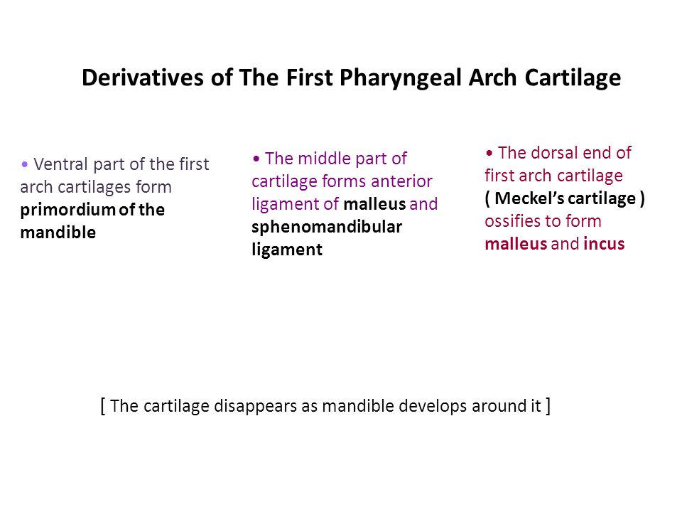 Derivatives of The First Pharyngeal Arch Cartilage