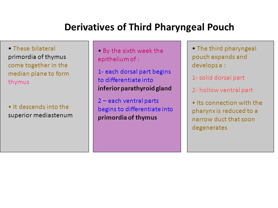 Derivatives of Third Pharyngeal Pouch