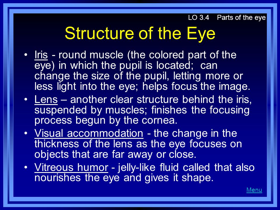 LO 3.4 Parts of the eye Structure of the Eye.