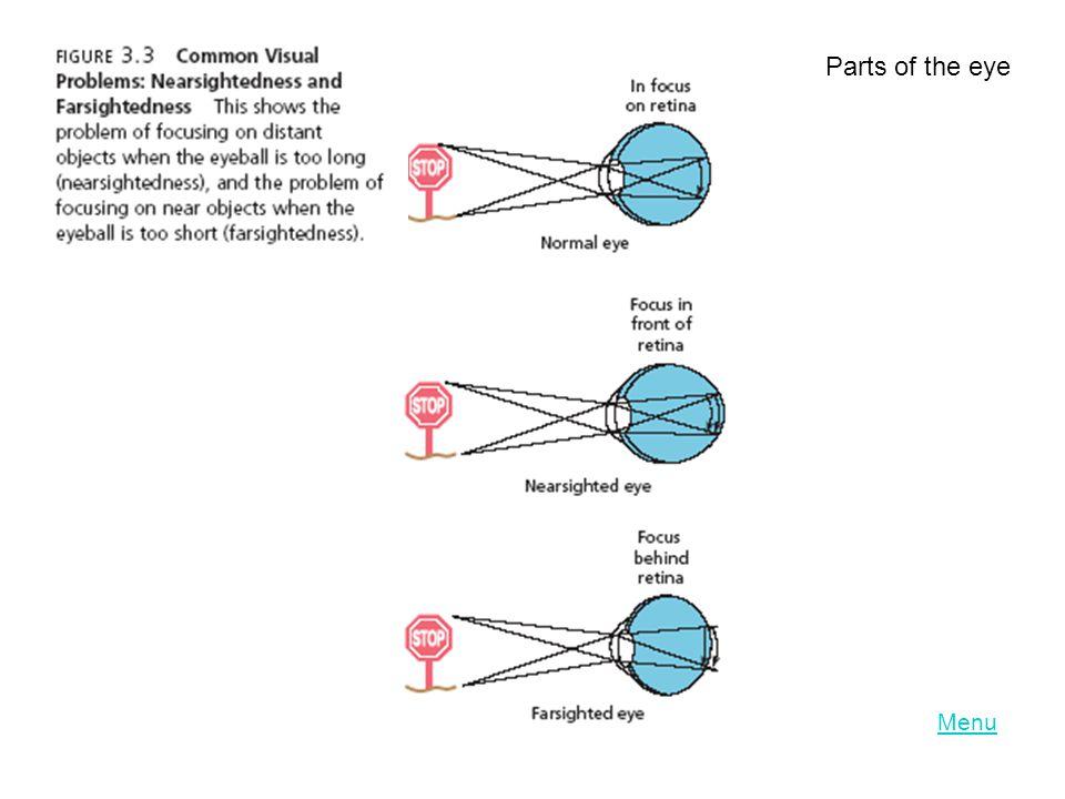 LO 3.4 Parts of the eye Menu