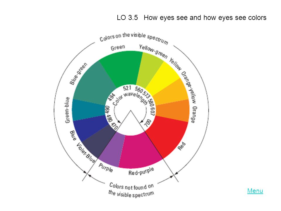 LO 3.5 How eyes see and how eyes see colors