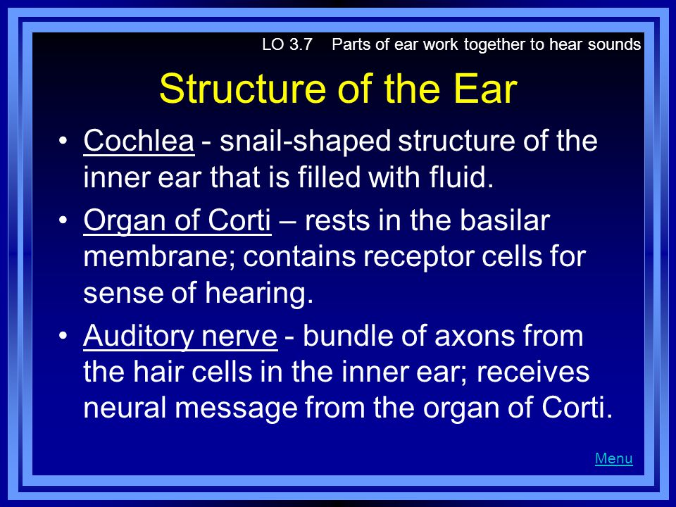LO 3.7 Parts of ear work together to hear sounds