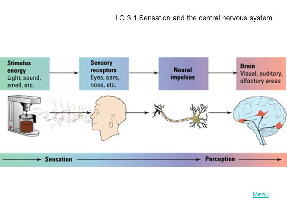 LO 3.1 Sensation and the central nervous system