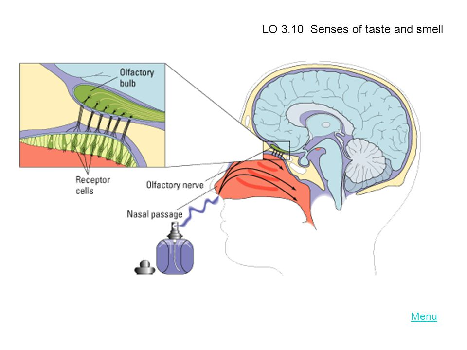 LO 3.10 Senses of taste and smell