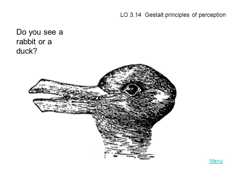 Do you see a rabbit or a duck