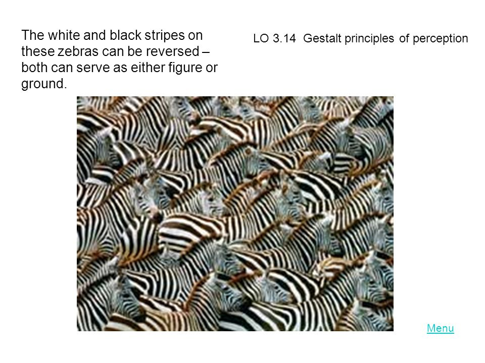 The white and black stripes on these zebras can be reversed – both can serve as either figure or ground.