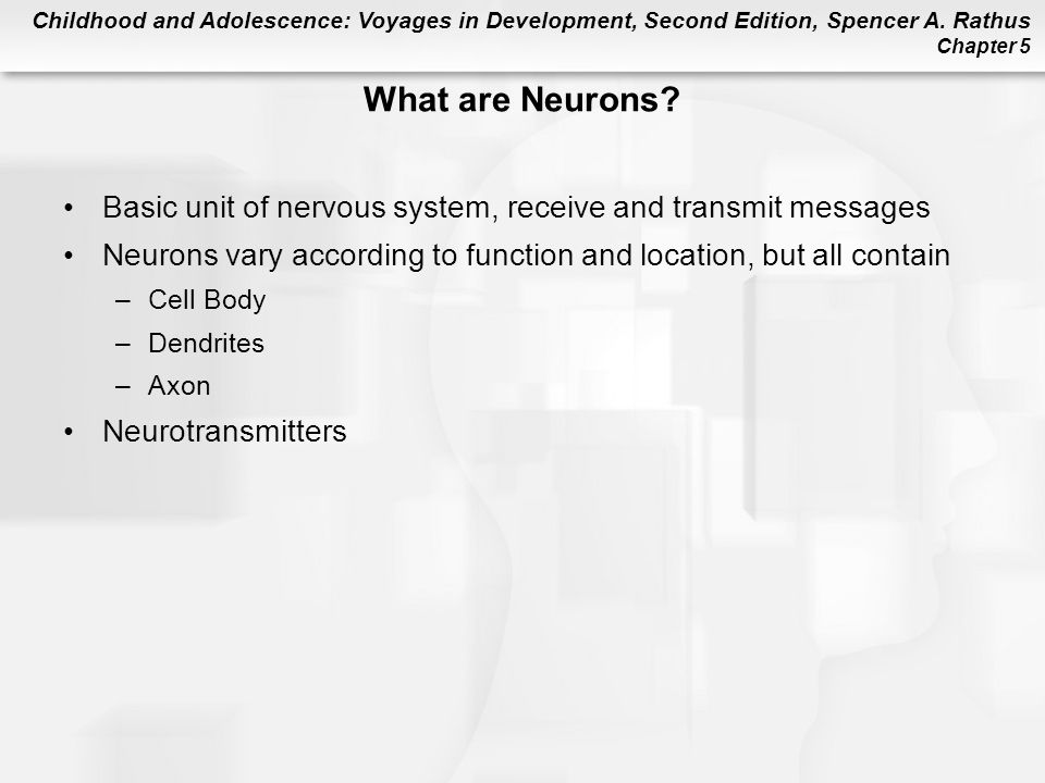 What are Neurons Basic unit of nervous system, receive and transmit messages. Neurons vary according to function and location, but all contain.