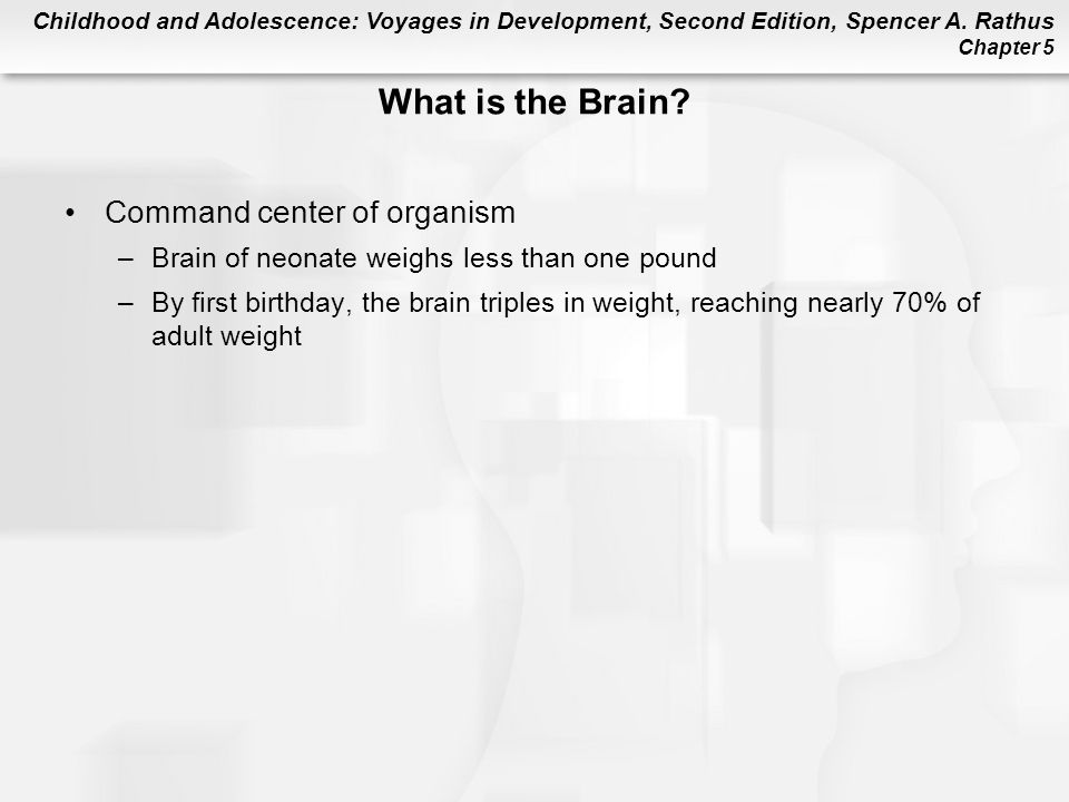 What is the Brain Command center of organism