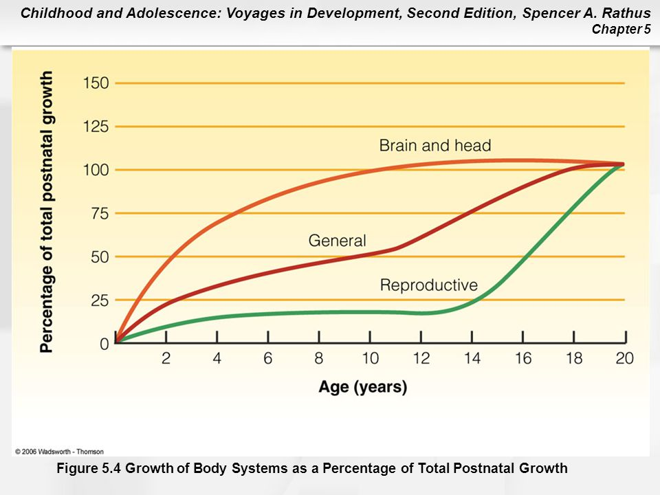 Figure 5.4 The Growth of Body Systems as a Percentage of Total Postnatal Growth. The brain of the neonate weighs about one-fourth its adult weight. In keeping with the principle of cephalocaudal growth, it will triple in weight by the first birthday, reaching nearly 70% of its adult weight.