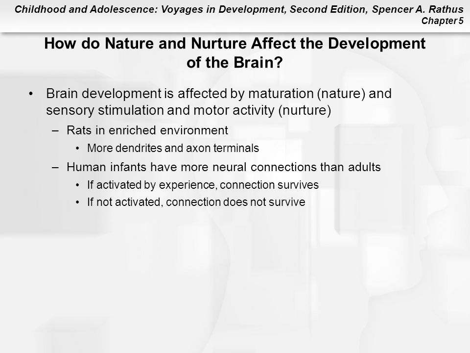 How do Nature and Nurture Affect the Development of the Brain