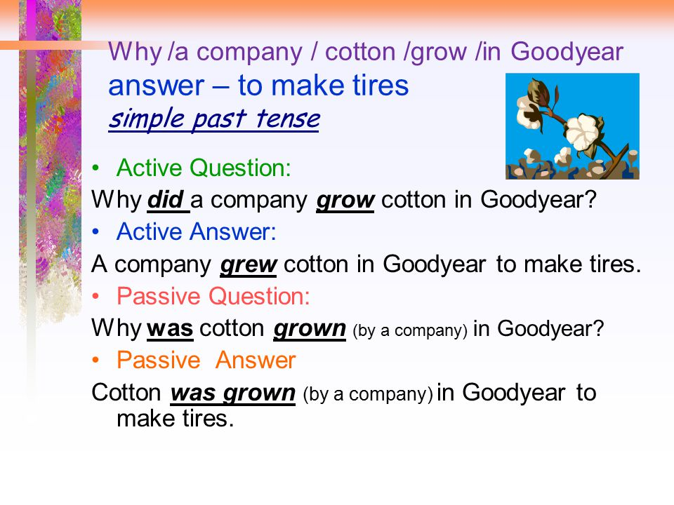 Why /a company / cotton /grow /in Goodyear answer – to make tires simple past tense