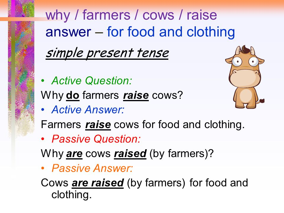 why / farmers / cows / raise answer – for food and clothing simple present tense
