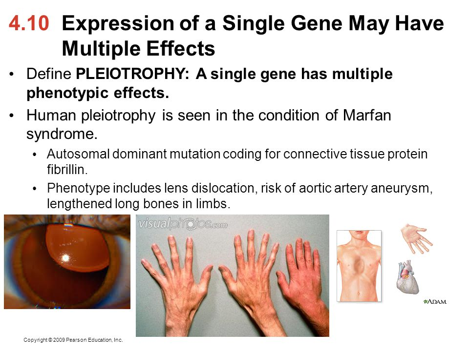 4.10 Expression of a Single Gene May Have Multiple Effects