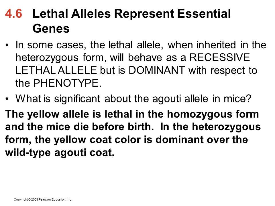4.6 Lethal Alleles Represent Essential Genes