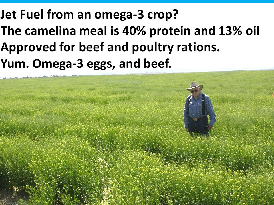 Jet Fuel from an omega-3 crop