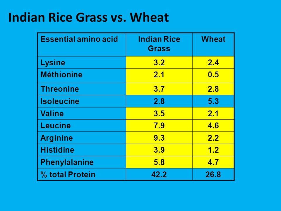 Indian Rice Grass vs. Wheat