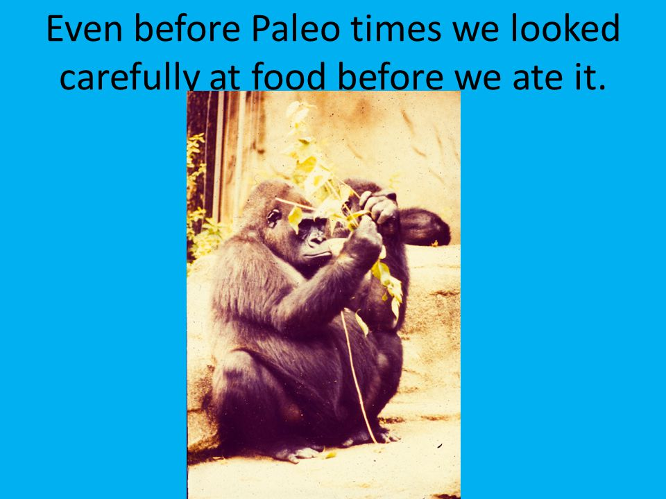 Even before Paleo times we looked carefully at food before we ate it.