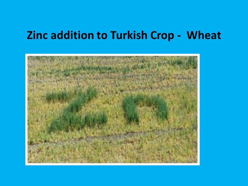 Zinc addition to Turkish Crop - Wheat