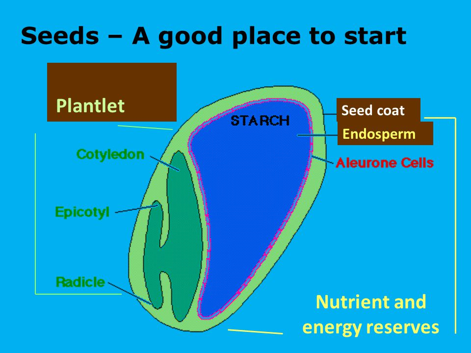 Seeds – A good place to start