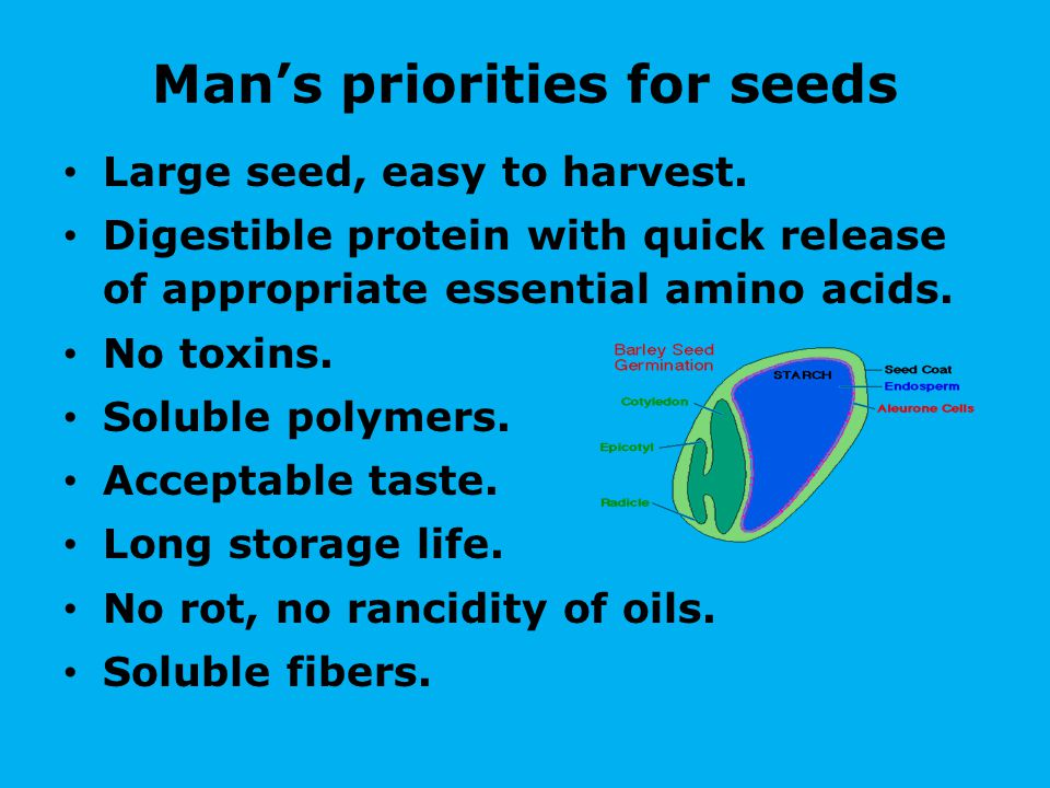 Man's priorities for seeds