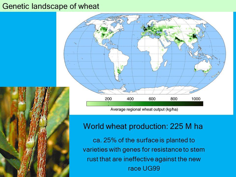 Genetic landscape of wheat