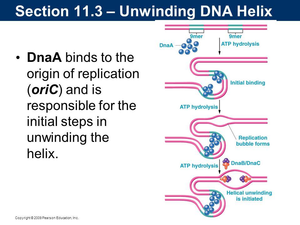 Section 11.3 – Unwinding DNA Helix