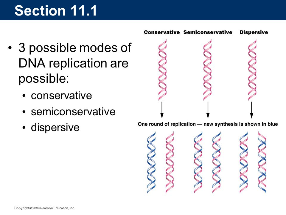Section 11.1 3 possible modes of DNA replication are possible: