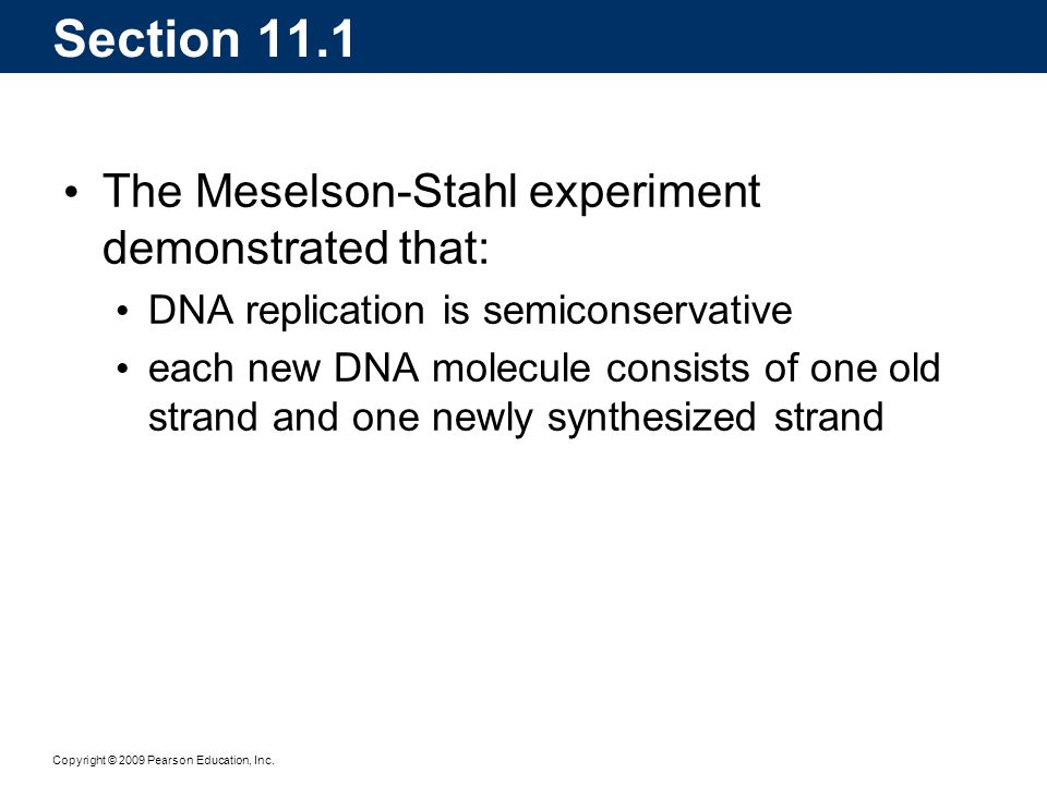 Section 11.1 The Meselson-Stahl experiment demonstrated that: