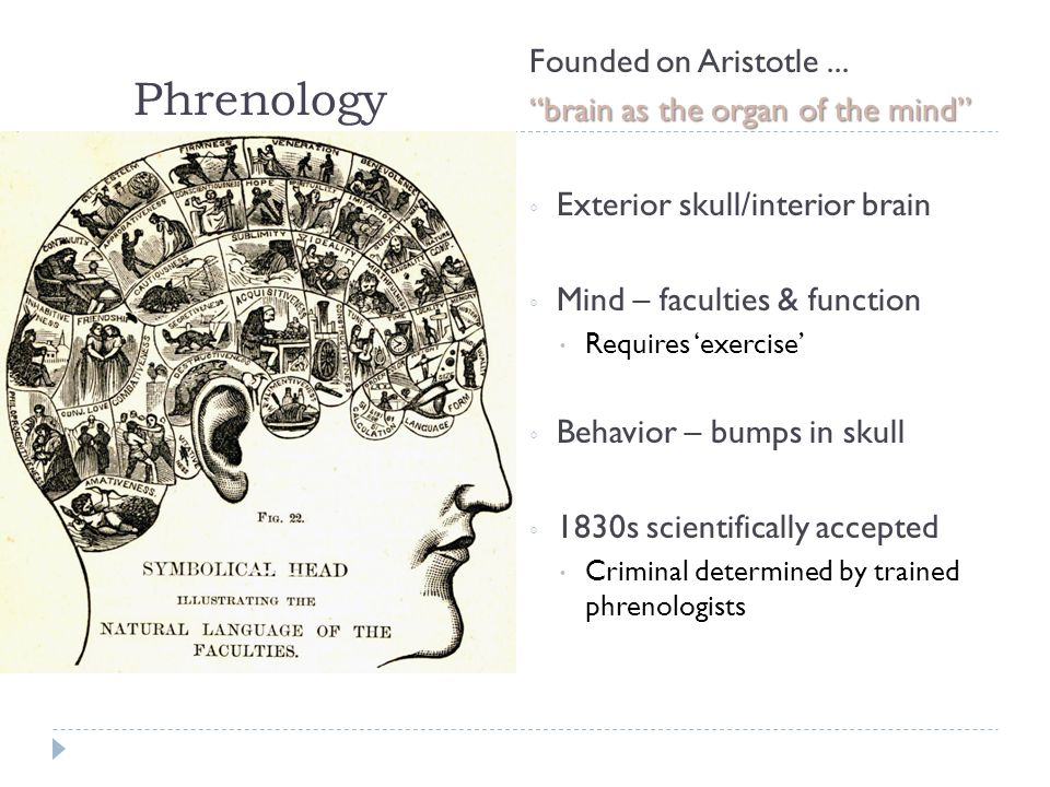 Phrenology Founded on Aristotle ... brain as the organ of the mind