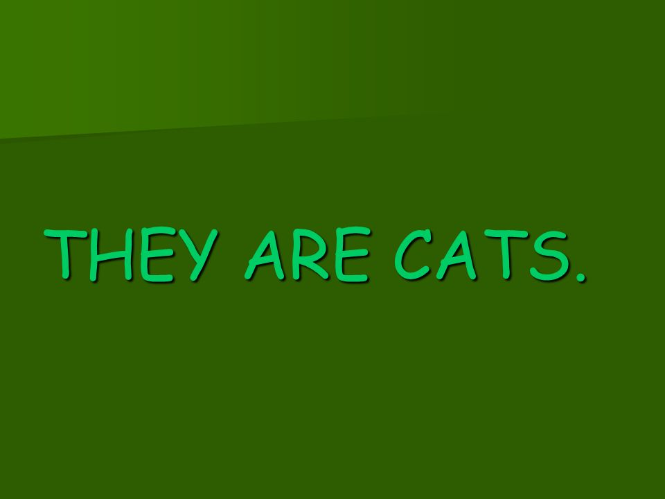 THEY ARE CATS.