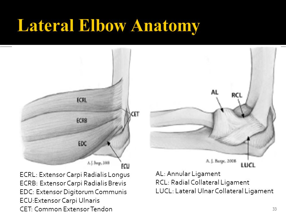 Lateral Elbow Anatomy AL: Annular Ligament