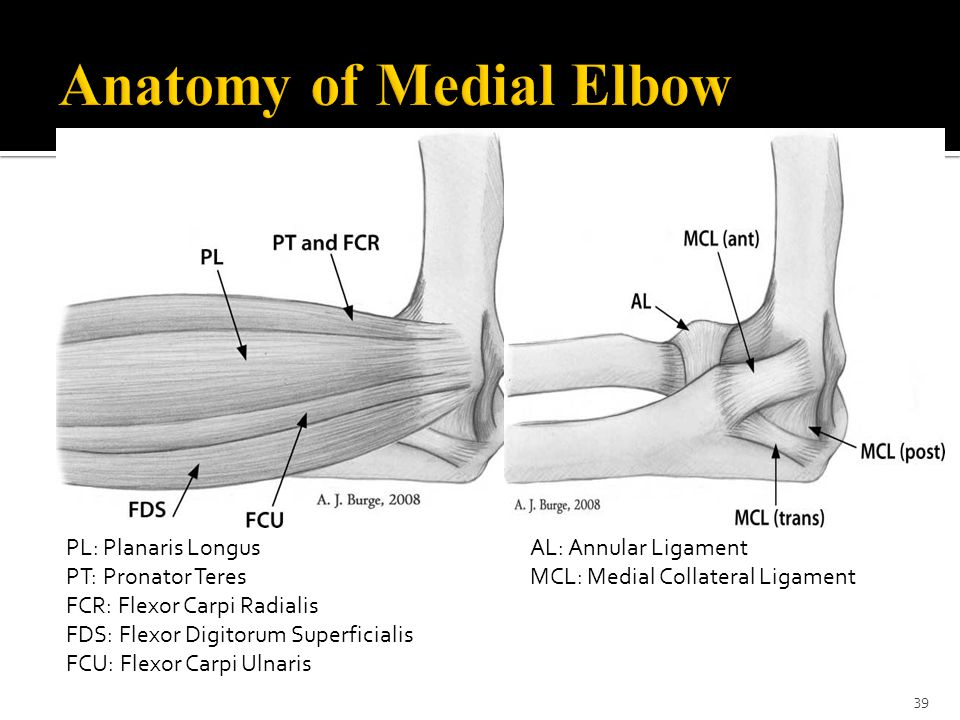 Anatomy of Medial Elbow