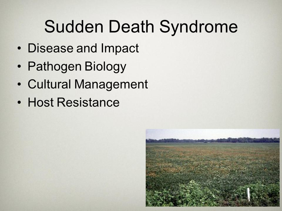 Sudden Death Syndrome Disease and Impact Pathogen Biology