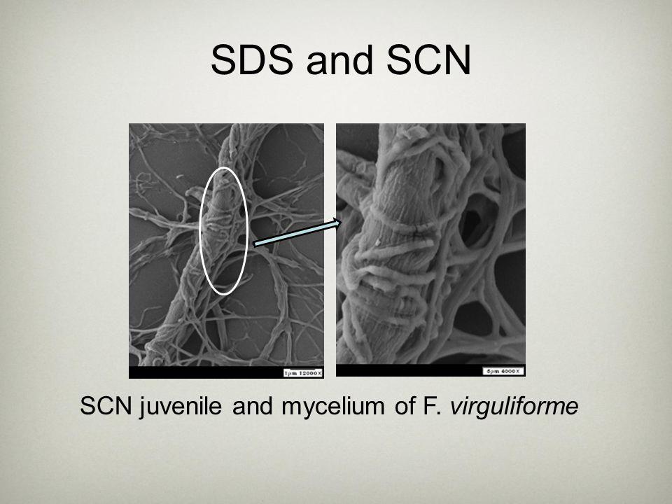 SDS and SCN SCN juvenile and mycelium of F. virguliforme