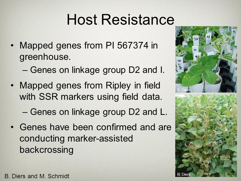 Host Resistance Mapped genes from PI 567374 in greenhouse.