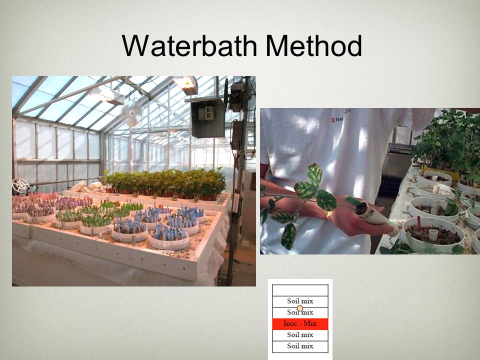 Waterbath Method