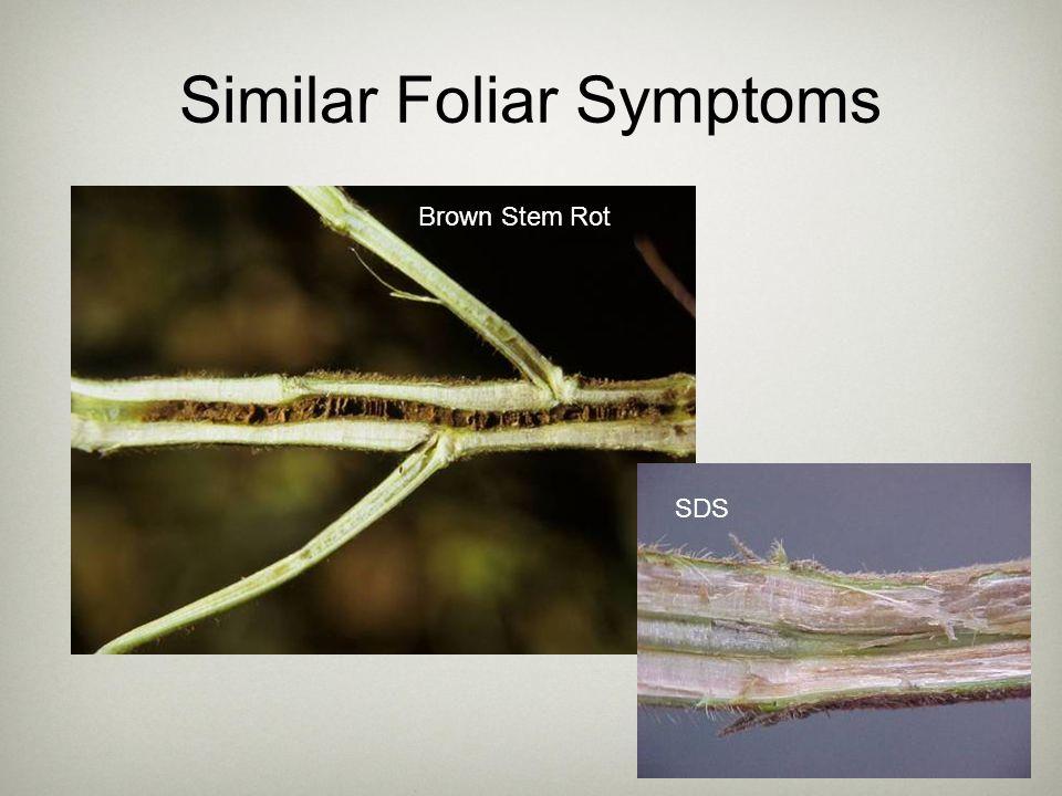Similar Foliar Symptoms